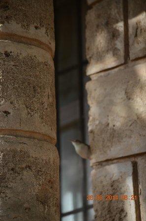 Maneland Jungle Lodge: Small birds