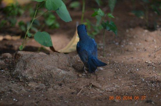 Maneland Jungle Lodge: Birds visiting for a drink