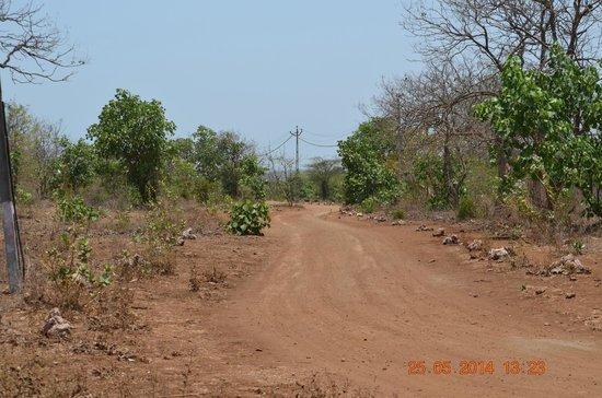 Maneland Jungle Lodge: Pathway to hotel