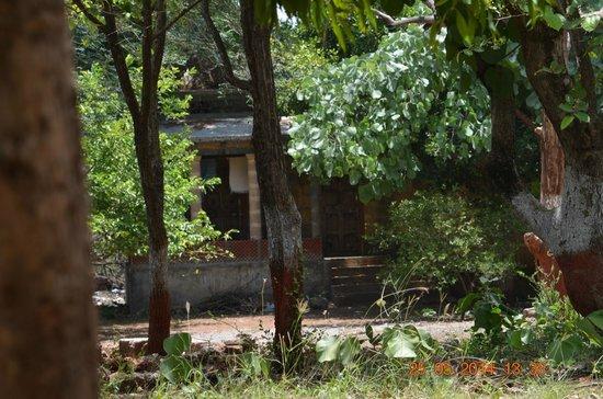 Maneland Jungle Lodge: Hotel grounds