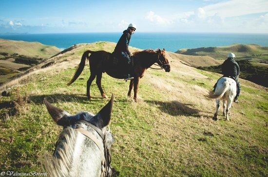 Wildcoast Ruapuke Horse Riding: Big Red