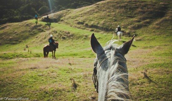 Wildcoast Ruapuke Horse Riding: Beautiful views