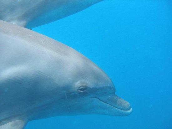 New Son Bijou Diving Center: MASSER af delfiner!!
