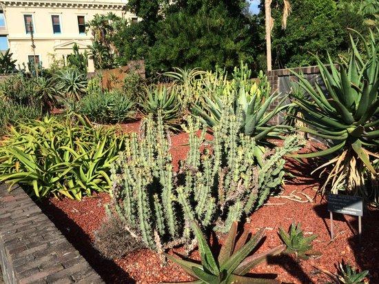 Royal Botanic Gardens : The succulent garden