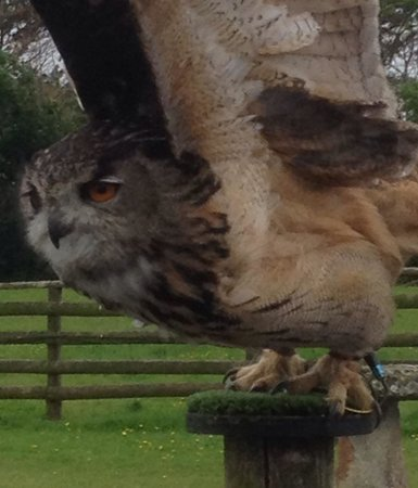 World of Country Life : The Owl at Country way of life