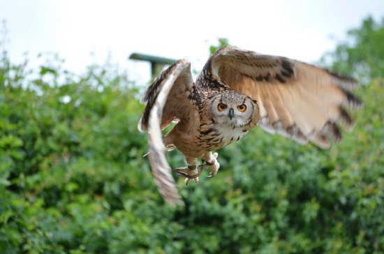 Suffolk Owl Sanctuary