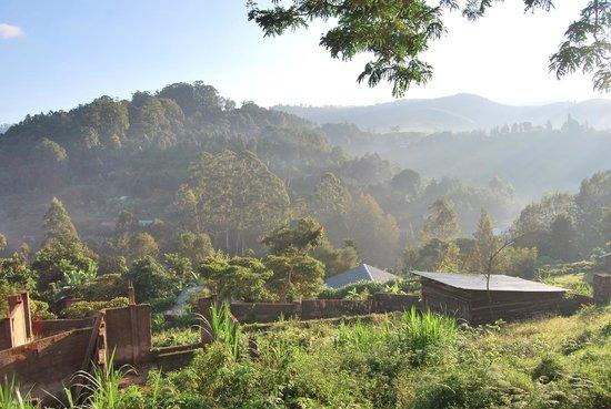 Avocado Lodge: View from the veranda