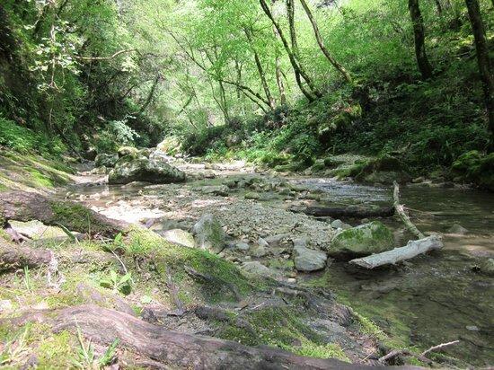 Parco delle Cascate: Sottobosco