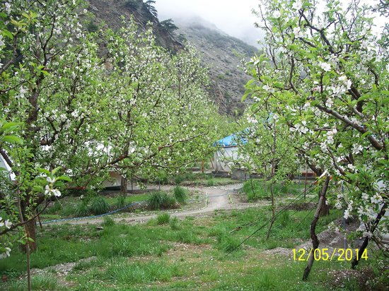 Apple Orchard Farm and Camping: AOFC campsite