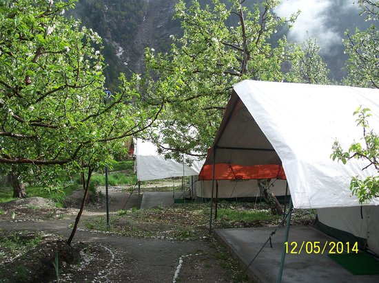 Apple Orchard Farm and Camping : AOFC Campsite