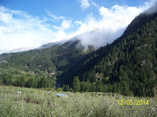 Apple Orchard Farm and Camping: Sangla valley