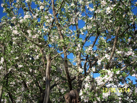 Apple Orchard Farm and Camping: Apple trees