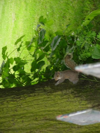 Hyde Park : Asquirrel