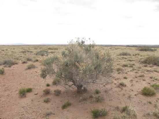 Homolovi State Park: Fabulous desert landscapes all around.