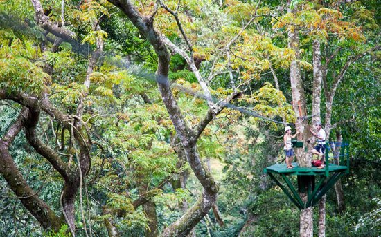 Mabira Forest Canopy Super Skyway