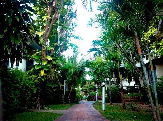 Coco Palm Beach Resort: Garden