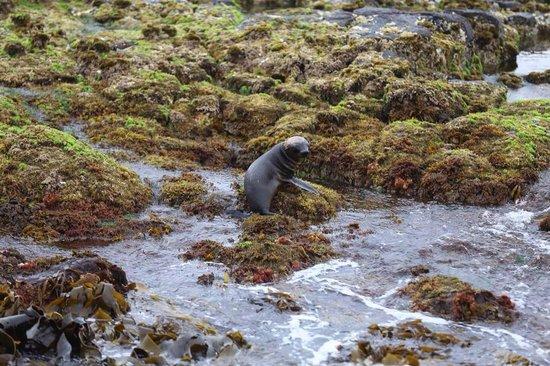 Wildlife Coast Cruises: Baby seal pup