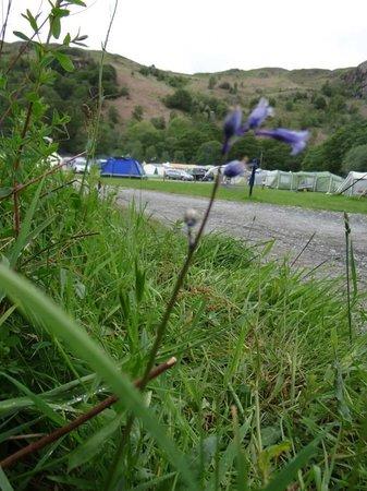 Fisherground Campsite: Lovely campsite