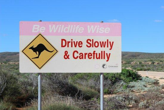 Cape Range National Park: Wildlife