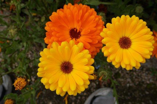 National Botanic Gardens: Flowers Botanic Gardens Dublin
