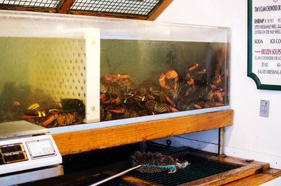 Lobster Pot: Lobster tanks