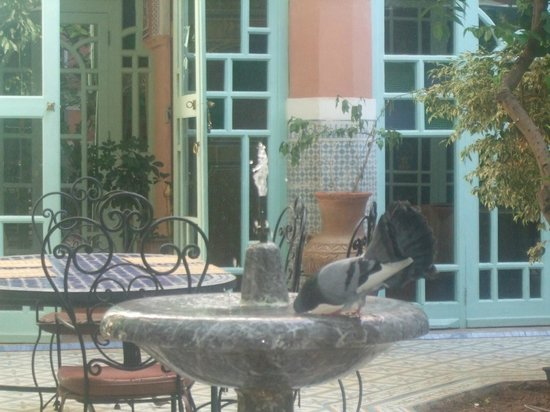 Riad Catalina: Doves enjoy the fountain