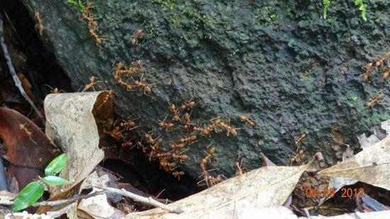 Klong Plu Waterfall: Fauna