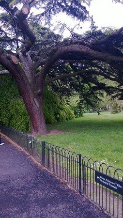 Hyde Park : С платанов  к вам сбегают белки, покормите их!