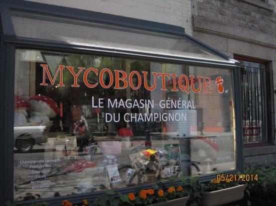 Plateau Mont-Royal : Mushrooms!