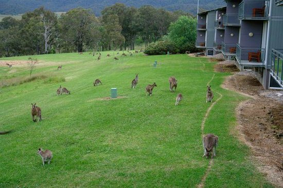 Golden Door Health Retreat & Spa Elysia : Every Evening, Kangaroos Were Outside Our #52 Villa