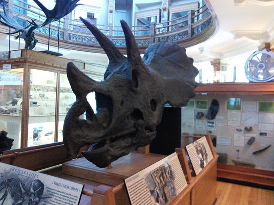 Musee Redpath : Tricératops teenager
