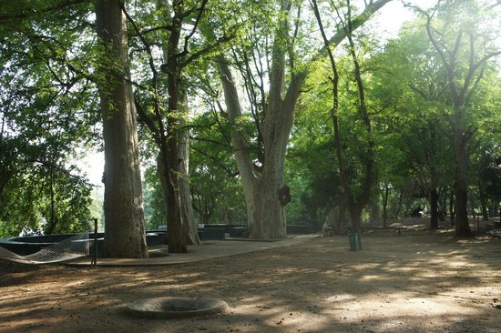 Galibore Nature Camp: the trees are old and huge