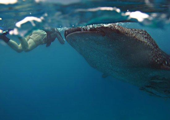 Atlantis Dive Resorts Dumaguete: снорк с китовой