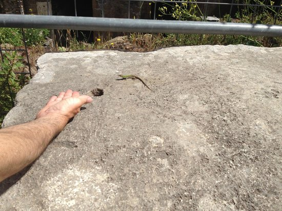 Palatine Hill: My dad making friends with a lizard on a piece of ruin