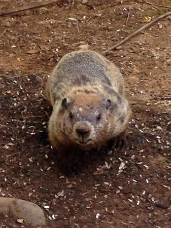 Music Road Resort Hotel: Groundhog