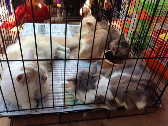 Gaya Street Sunday Market: Cats crammed in cages