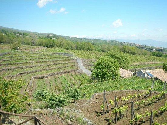 Agriturismo Le case del merlo: Au milieu des vignes .... bio ......