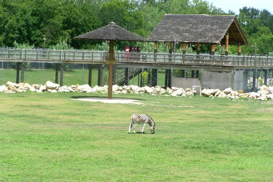 Frank Buck Zoo: Out on the Savannah Walkway