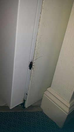 Daytona Beach Resort and Conference Center: Bug in the kitchen