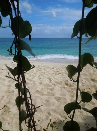 Dany's Beach Bar: Vines over a little alcove in the cliffs