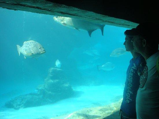 Atlantis, Beach Tower, Autograph Collection: Há diversos aquários espalhados por todo o complexo Paradize.
