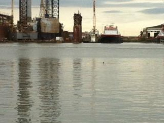 Fisherman's Wharf : Dolphins at Fisherman's Warf