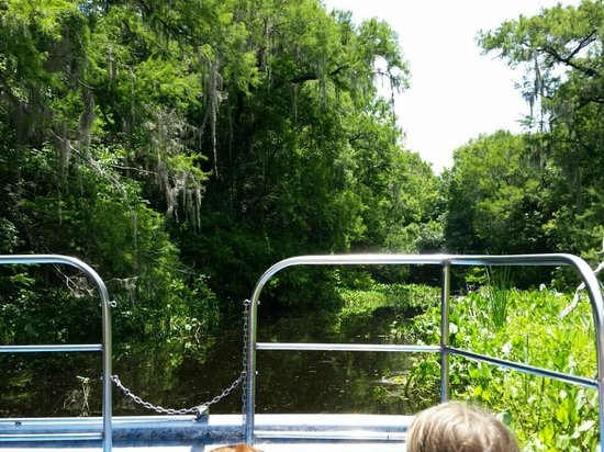 Tom and Jerry's Airboat Rides: Stopping the boat to see the alligators in their natural habitat.