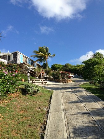 Virgin Islands Campground : Central campground area