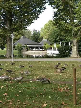 Schlossgarten: 公園の中の、中央駅に近い方の池