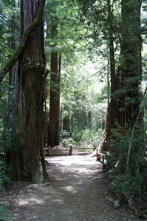Big Basin Redwoods State Park : Big Basin