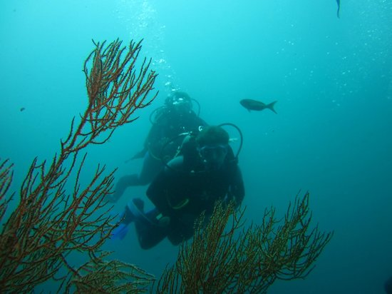 Finch Bay Eco Hotel : Scuba Diving