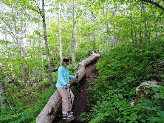 The Buck House Inn on Bald Mountain Creek: Hiking Trail