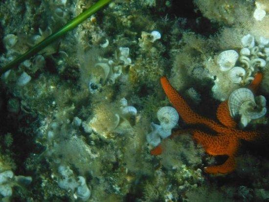 Zonaktiva: haciendo snorkel te puedes encontrar con una estrella!