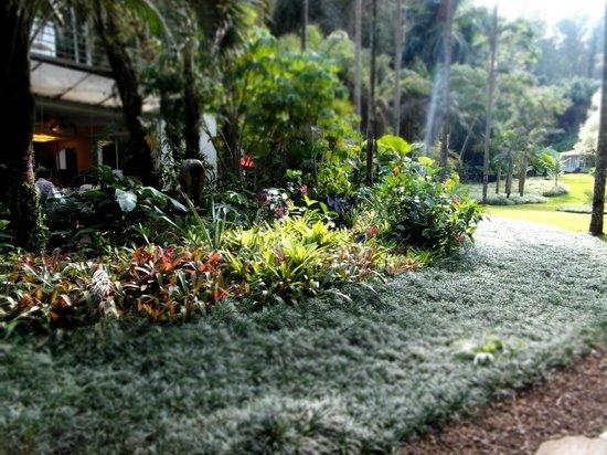 Inhotim : Jardim de um dos restaurantes do parque